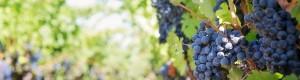 Wine Tour1